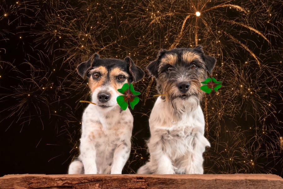 Jak zadbać o psa w sylwestra?