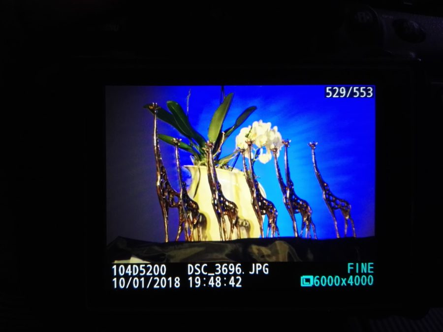 Śremskie Żyrafy (fot. Szymon Mądry)