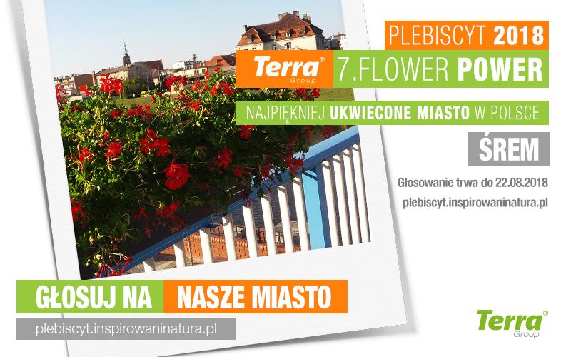 Terra Flower Power: śremskie dekoracje kwiatowe biorą dział w plebiscycie