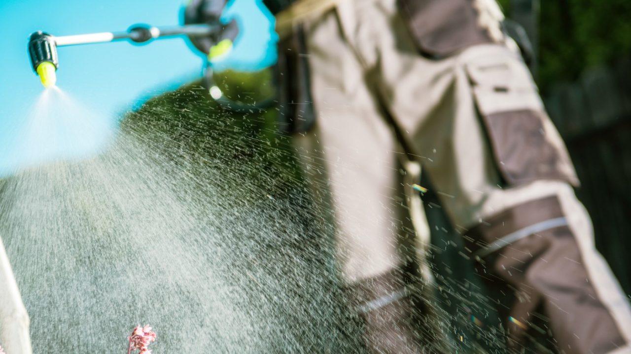 Pysząca walczy z plagą insektów: 16 sierpnia dezynsekcja
