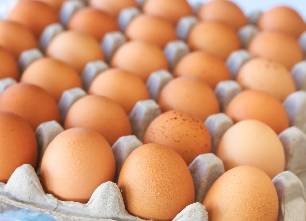 Salmonella w jajkach z Manieczek. Spożycie może być groźne dla zdrowia.