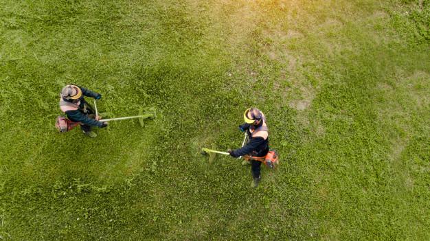 Jak najlepiej dbać o trawnik w ogrodzie?